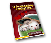 Other designs - Ferret Care Advice Ezine Cover
